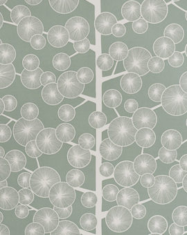 cotton-tree-misp1033